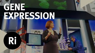Glow In The Dark Worm Genes - Christmas Lectures with Alison Woollard