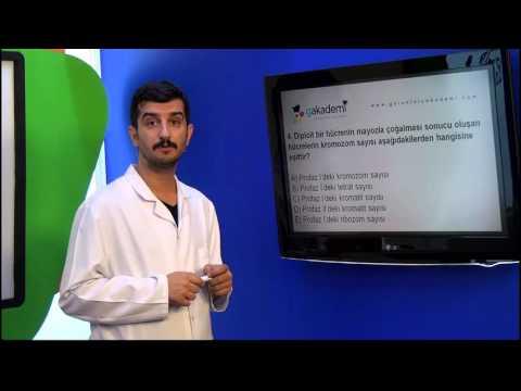 10. Sınıf Biyoloji Görüntülü Eğitim Seti (Soru Çözümleri)