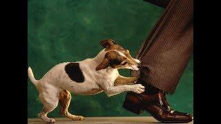 Ученые выяснили, каких людей собаки кусают чаще