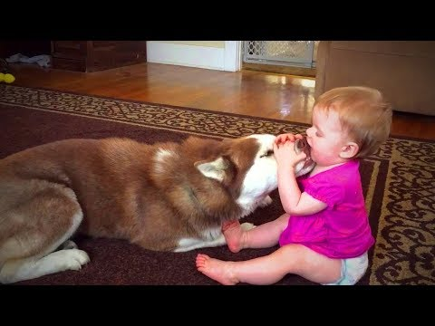 Dogs Babysitting Babies 👶🐶 Dogs Love Babies (Part 1) [Funny Pets]