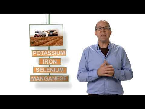 WaGrown Potato Innovation-Craig Hunt-Nutritionist
