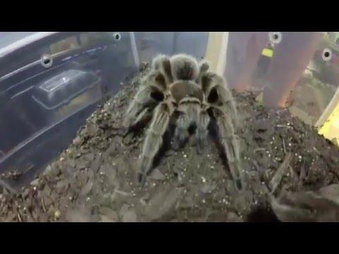 Invertebrates & Arachnids Part 1