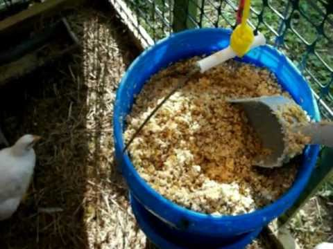 Fermented Feeds for free ranged broiler chickens...no, it doesn't get them drunk!
