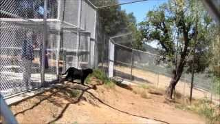 Black Leopard: Alexander Moves To PAWS' ARK 2000