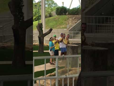 Zoo Miami show Volunteers Grossed Out at Holding a Giant Snake