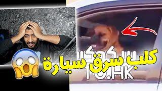 مقاطع المتابعين #7 ( كلب يسوق سيارة 😳؟)