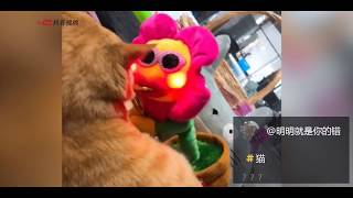 【抖音】动物成精系列 TIK TOK 2018最新动物搞笑视频合集 (5) 萌宠 超级可爱