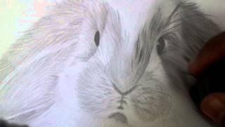 Draw Rabbit Fur part 3 by Mohamed Tarek Elmenyawie