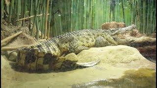 Рептилии Московского зоопарка