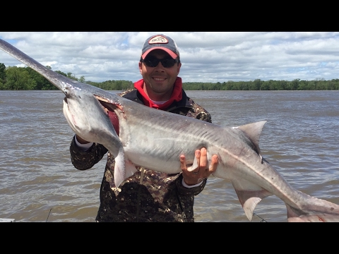 Snagging Paddlefish In Northeast Oklahoma