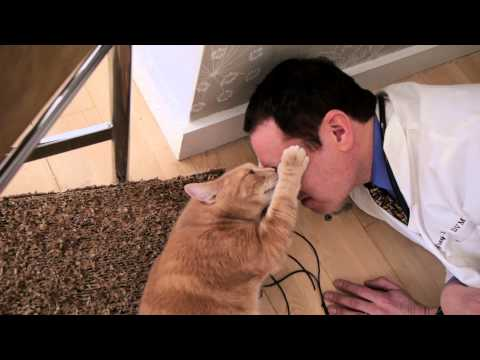 Why Do Cats Rub Their Mouth on People? : Loving Your Cat