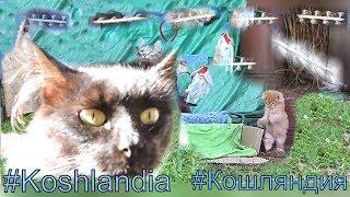 #Koshlandia Siberian farm cats МИРА c Котятами летающие рыбы Skyfish Flying Rods