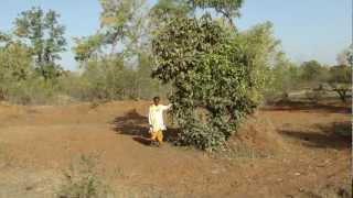 Medicinal Plants of Chhattisgarh (Raigadh Fmls.): Pankaj Oudhia