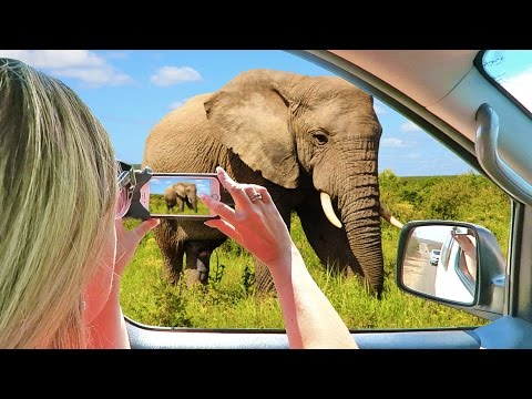 HOW TO SAFARI in KRUGER NATIONAL PARK | South Africa Vacation