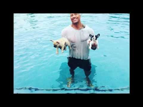 Top 5 Celebrities and their pets!!!
