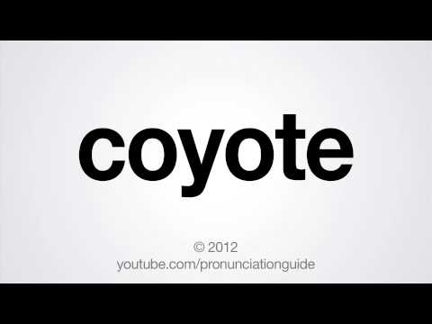 How to Pronounce Coyote