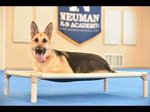 Scout (German Shepherd Dog) Boot Camp Dog Training Video Demonstration