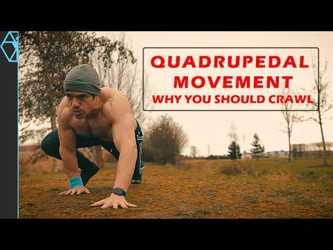 Quadrupedal Movement: Why You Should Crawl Like a Bear (Or Lizard)