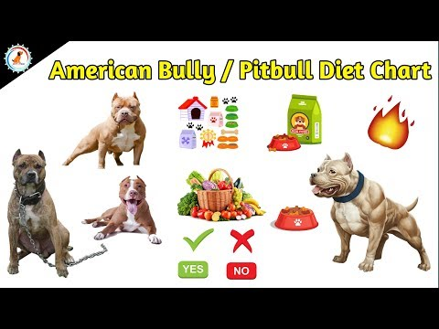 what is the best diet for a pitbull