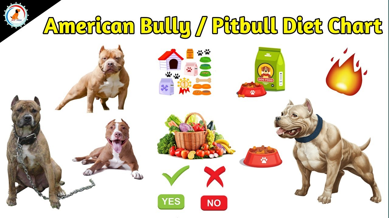 American Bully/Pitbull Diet Chart / Dog diet food / At Mix