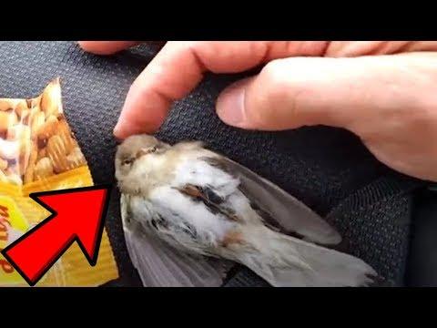 affe zeigt vogel