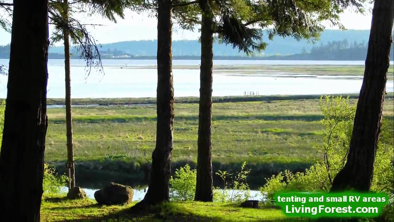 living forest oceanside campground tenting and small rv. Black Bedroom Furniture Sets. Home Design Ideas