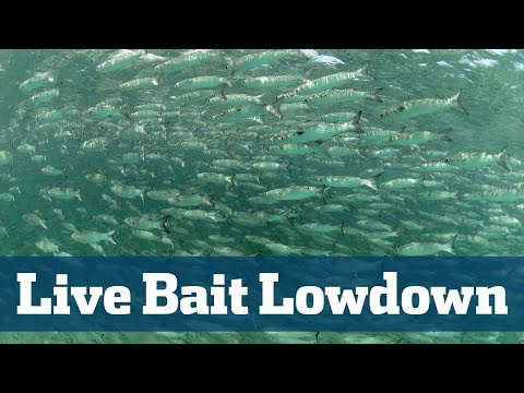 Live Bait Lowdown - Florida Sport Fishing TV