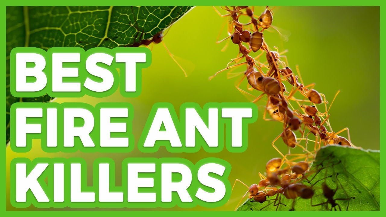 10 Best Fire Ant Killers The Best Fire Ant Killer In 2019 Youtube