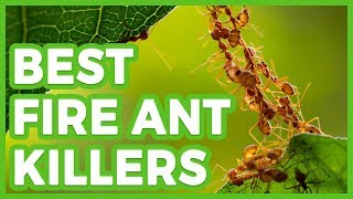 ✅ 10 Best Fire Ant Killers 🌄 The Best Fire Ant Killer in 2018