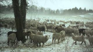 Hiver Nomade (2012) Trailer