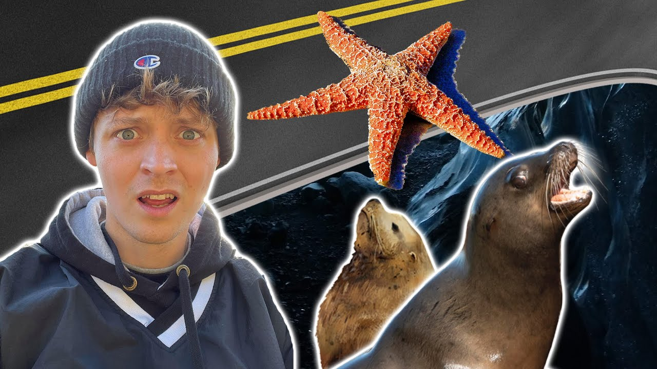 Amazing Ocean Animals   THESE SEA LIONS LIVE UNDER THE ROAD!