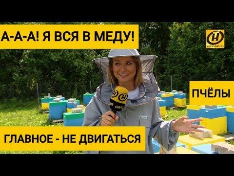 Пчёлы. Главное - не двигаться. Пчеловод. Легко ли содержать улей?