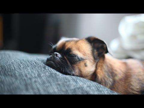 Музыка Собаки и щенки спят Эффект сна