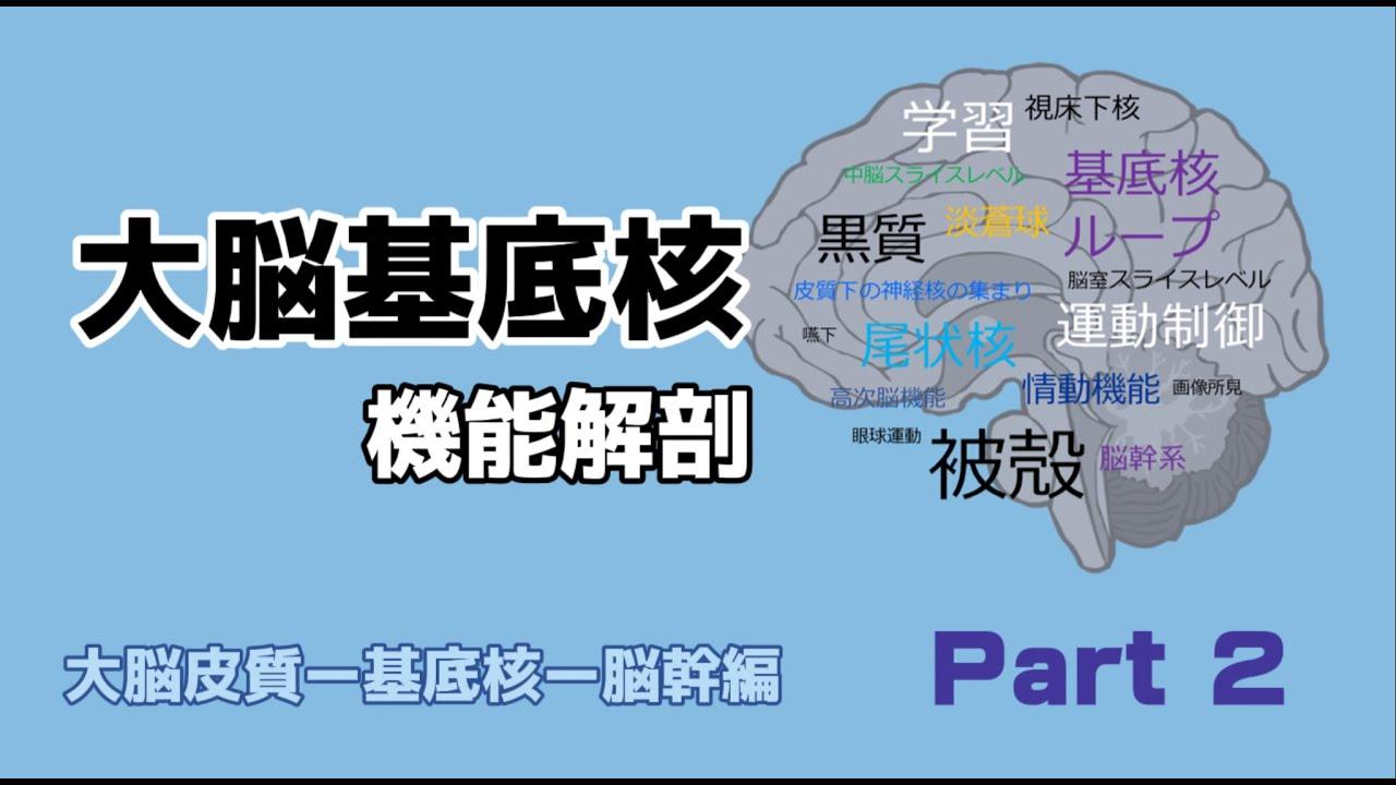 核 大脳 機能 基底