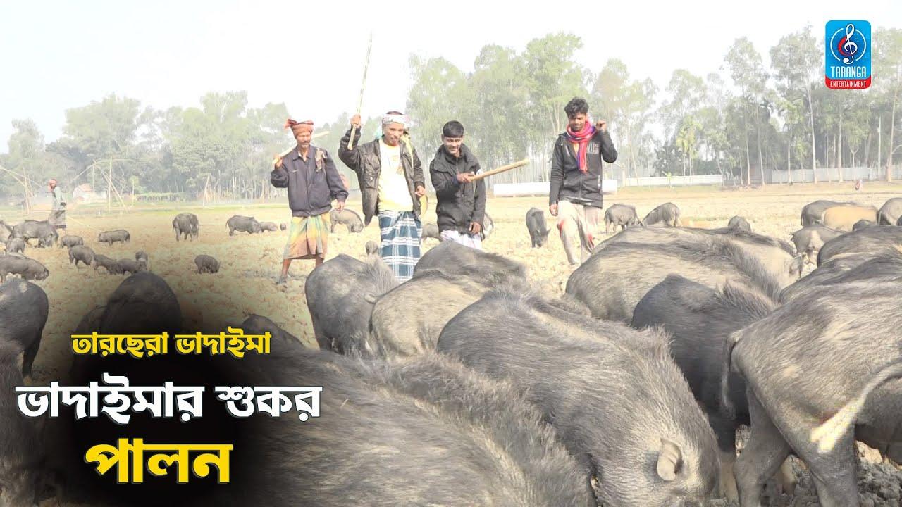 ভাদাইমার শুকর পালন | চরম হাসির কৌতুক | Vadaiomar Sukorer Palon | Bangla New Comedy Koutuk 2021