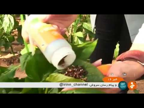 Iran Biological treatments for 20,000 Hectares Greenhouses, Yazd درمان زيست شناختي گلخانه ها