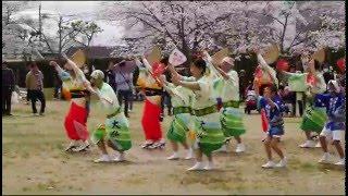 2016大仏連 兜台桜祭り 1 踊り前半