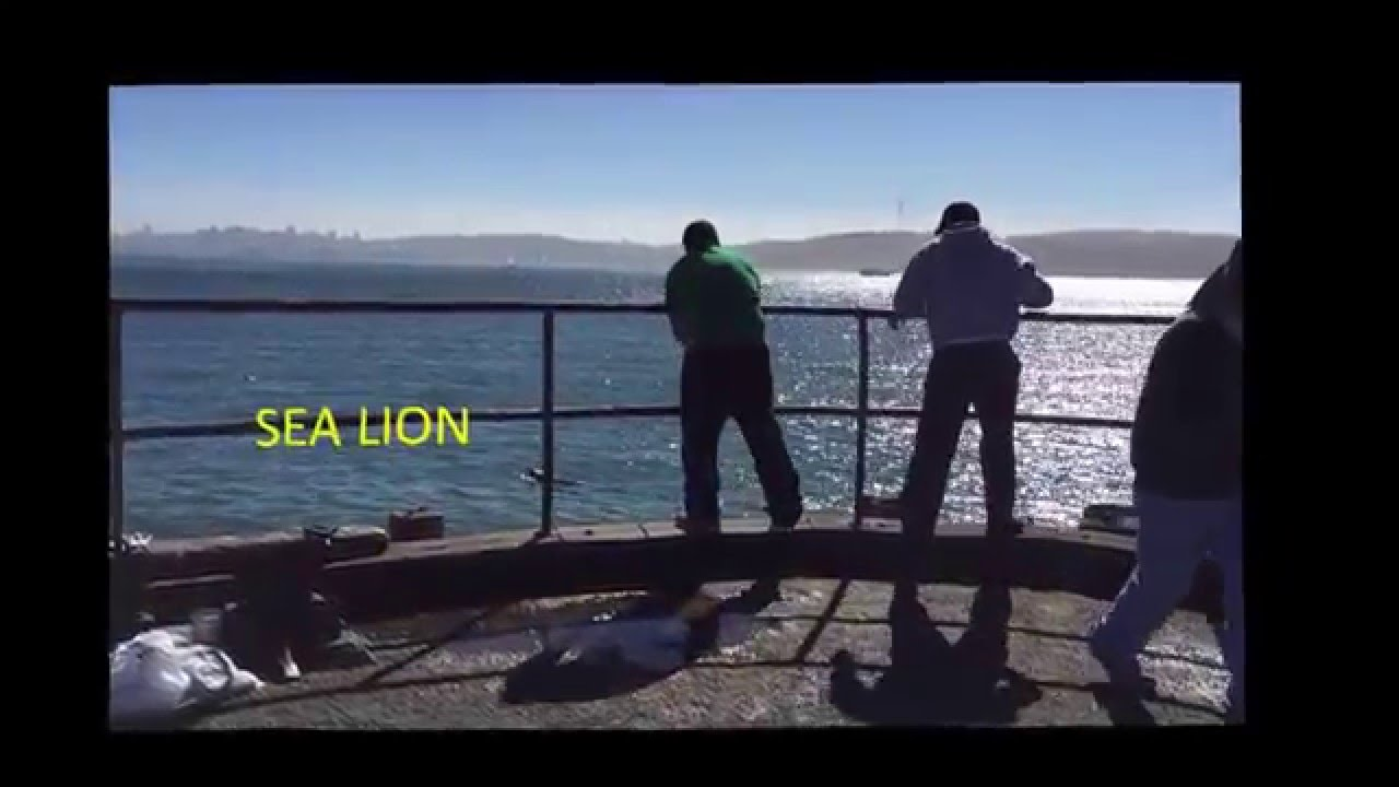 How to fish for mackerel in the san francisco bay youtube for Sf bay fishing report