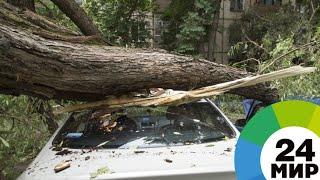 «Это был настоящий кошмар»: ураган в Грузии сорвал крыши и повалил деревья - МИР 24