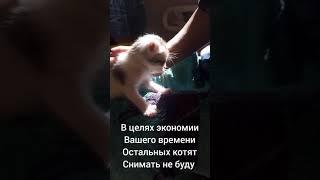 Котята без кошки, как мыть котят, вводим 2ой прикорм, 26 дней с рождения