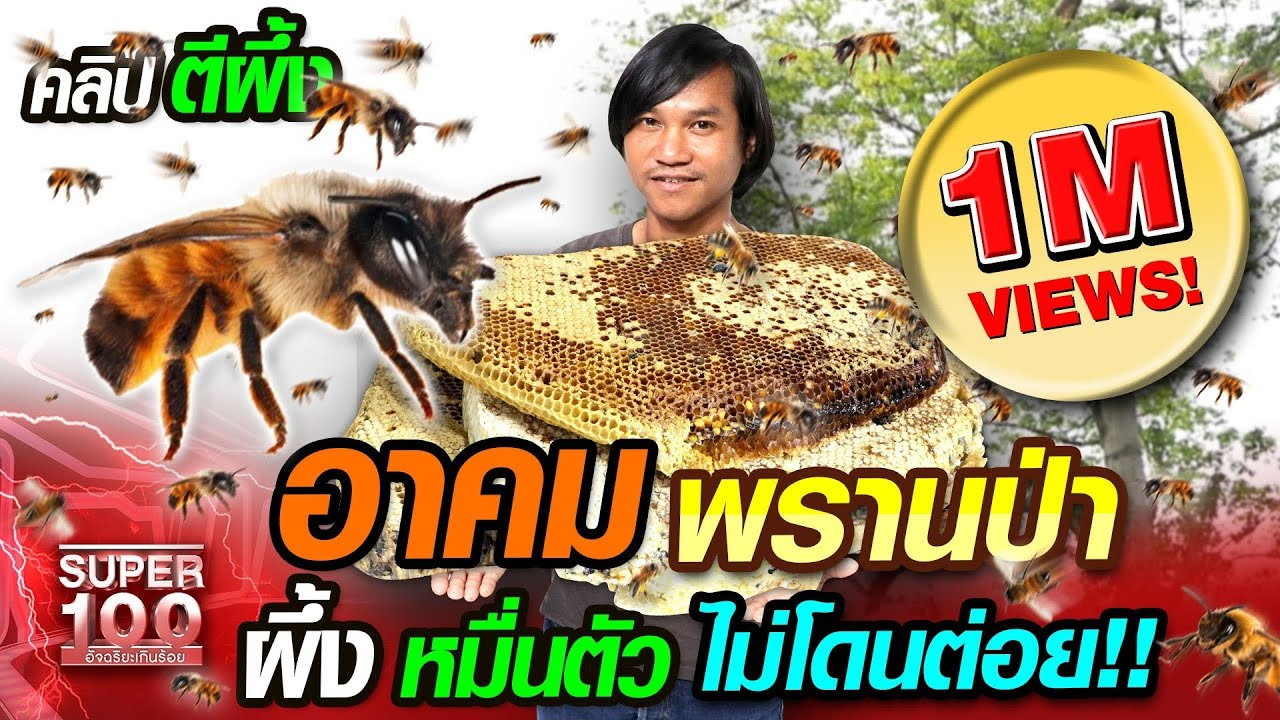 ต้อม อาคม พรานป่า ผึ้งหมื่นตัว ไม่โดนต่อย  | SUPER100