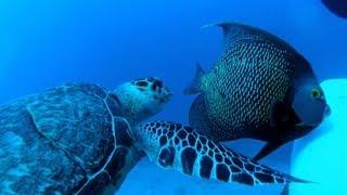 Aquarius: The undersea laboratory