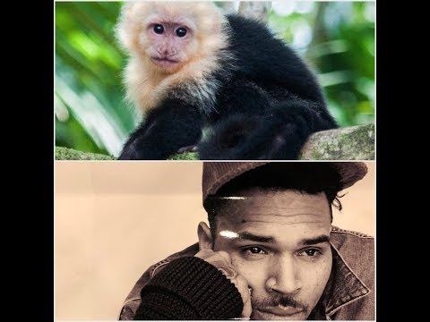 Chris Brown is facing CRIMINAL CHARGES and up to 6 MONTHS in jail for MONKEY GIFTED to DAUGHTER Mp3