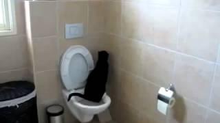 Кот ходит в туалет как человек - YouTub