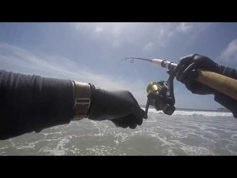 Easier Surf Fishing! | Corbina, Halibut, And BSP With The Lucky Craft Flash Minnow