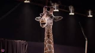 Смешная реклама Krakatao, Жираф