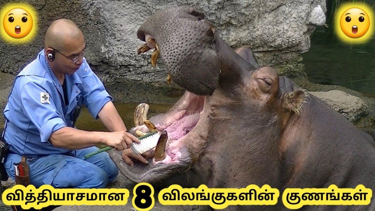 ஆச்சரியமான விலங்குகள்  Eight Amazing Animals Tamil Galatta News