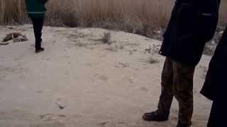 Здесь я нашел монеты...(Проводник показывает место где он находил серебрянные царские монеты на пляже. Канал