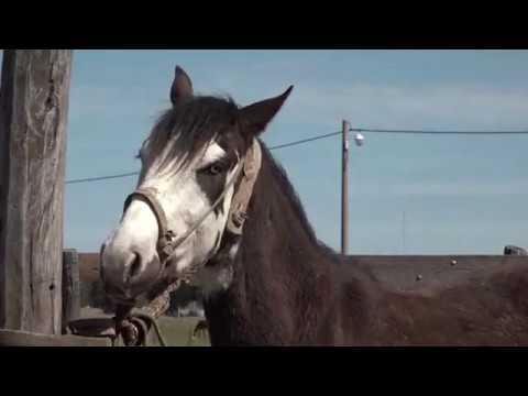 Cabalgata Aquitania 2018 Etapa 1 from YouTube · Duration:  36 minutes 34 seconds