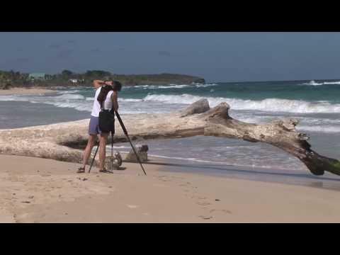 Jamaica Beach & Waves HD